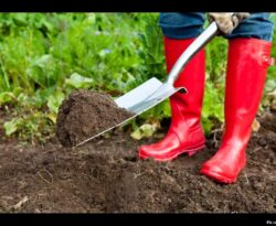 Soil biota, antimicrobial resistance and planetary health