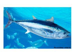 Antibiotic Resistance and Virulence Gene Characteristics of Methicillin-Resistant Staphylococcus aureus (MRSA) Isolated from Healthy Edible Marine Fish