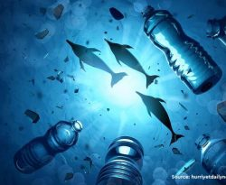 Microplastic's role in antibiotic resistance