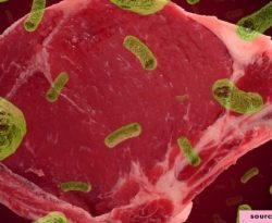 Prevalence and antibiotic resistance ofListeria monocytogenesin camel meat