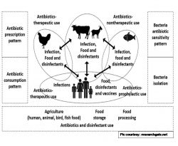 Harmonized One Health Trans-Species and Community Surveillance for Tackling Antibacterial Resistance in India: Protocol for a Mixed Methods Study