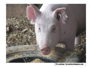 Simultaneous reduction of antibiotics and antibiotic resistance genes in pig manure using a composting process with a novel microbial agent