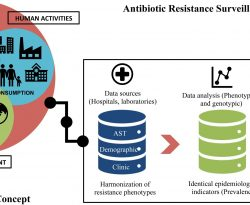 Antibiotic resistance surveillance systems: A review