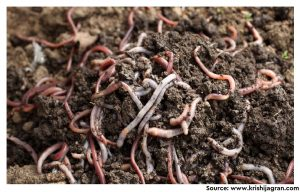 Deciphering potential roles of earthworms in mitigation of antibiotic resistance in the soils from diverse ecosystems