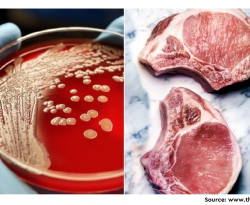 Prevalence and Multidrug Resistance Pattern of Methicillin Resistant S. aureus Isolated from Frozen Chicken Meat in Bangladesh