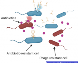 Current Challenges and Future Opportunities of Phage Therapy